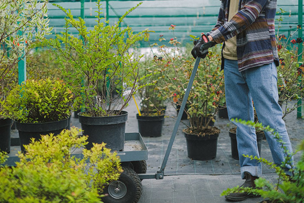Go ahead and take advantage of end-of-season sales on shrubs.